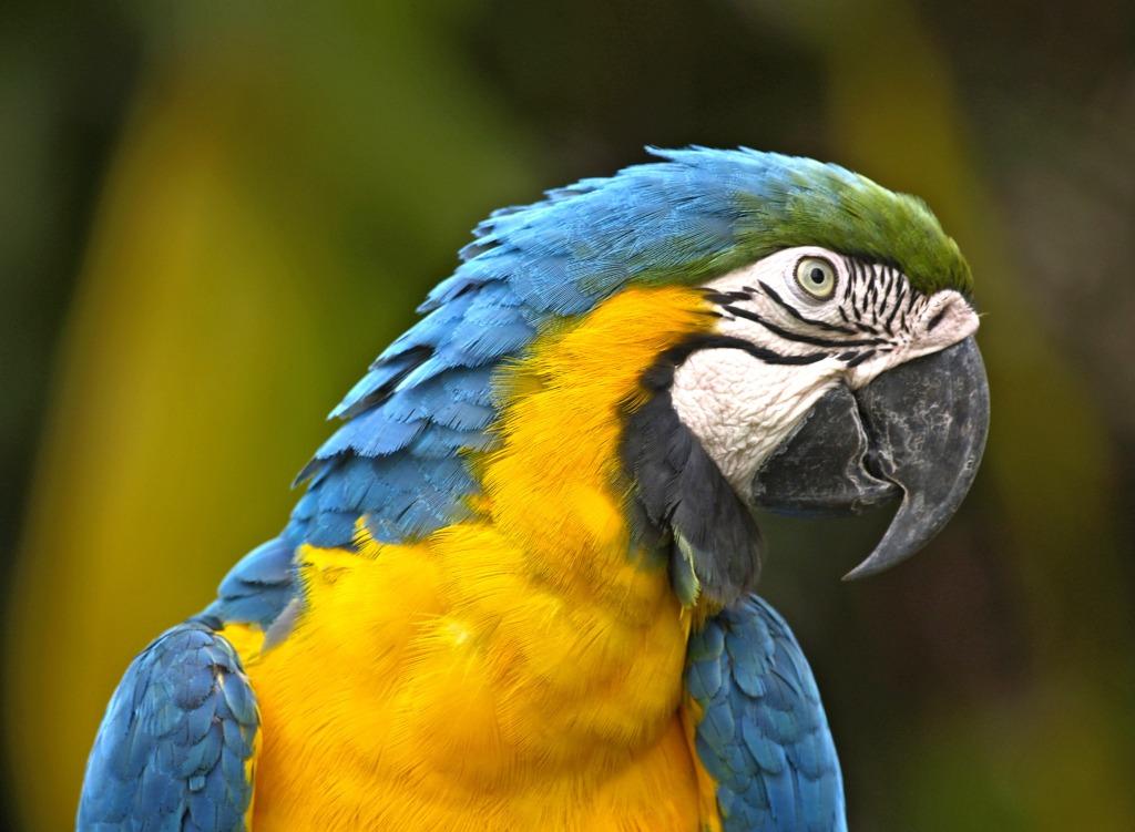 Data on bird beaks will help explain the evolution of bird species